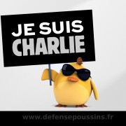 poussin-charlie